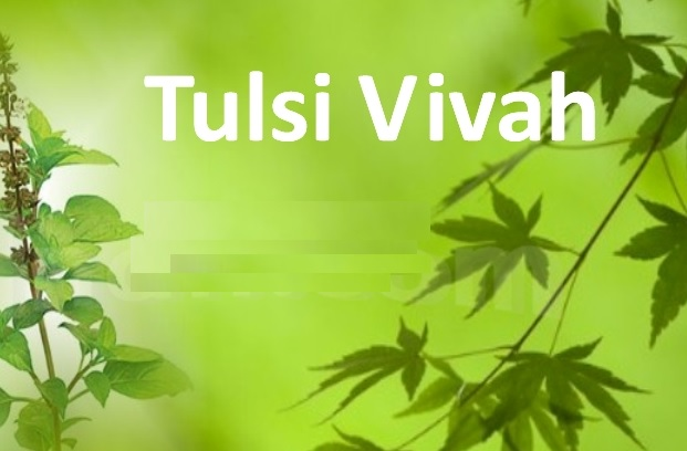 tulsivivha